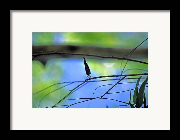 Butterfly Framed Print featuring the photograph Life On The Edge by Randy Oberg