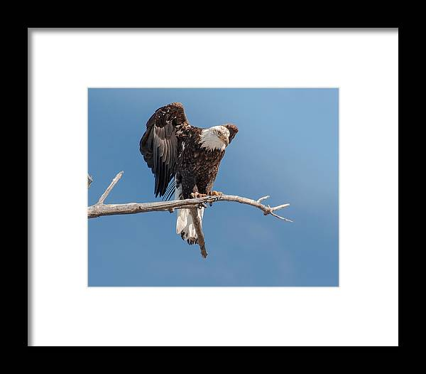 Framed Print featuring the photograph Lift Your Wings by John Bartelt