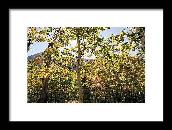 Landscape Framed Print featuring the photograph Light And Leaves by Caroline Clark
