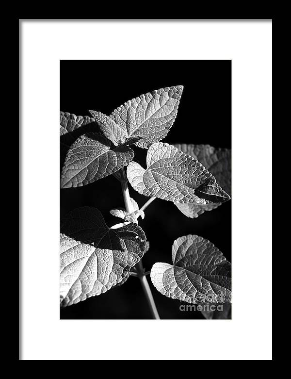 Light Framed Print featuring the photograph Light And Shadow by Jeannie Burleson