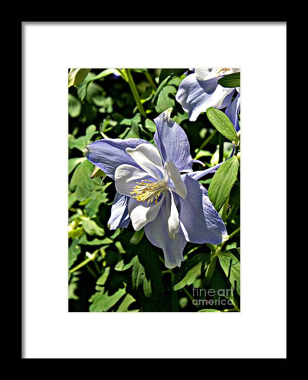 Floral Framed Print featuring the photograph Light Blue by Robert Sander