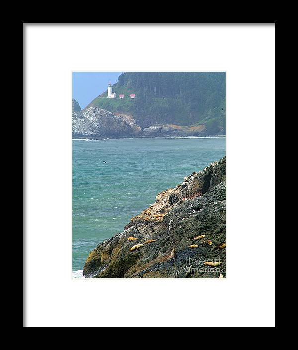 Light House Sea Lions Ocean Beach Framed Print featuring the photograph Light House And Sea Lions by Nick Gustafson
