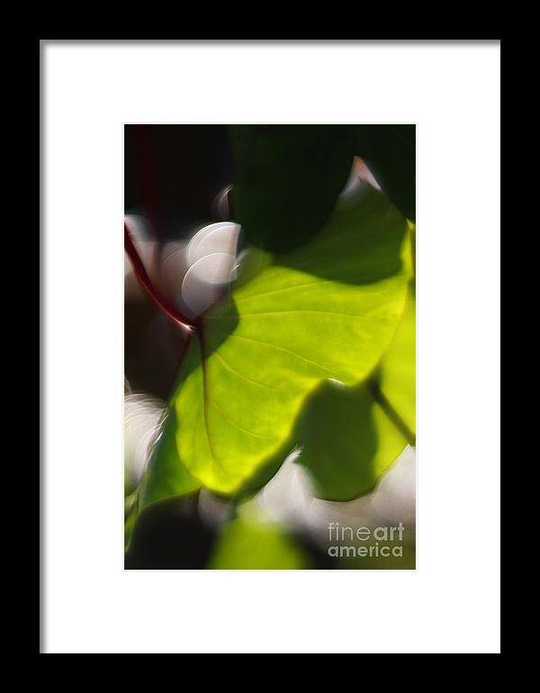 Green Framed Print featuring the photograph Light I by Katherine Morgan