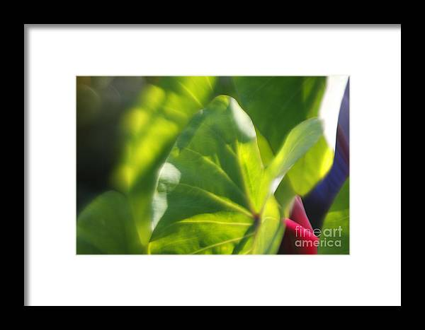 Green Framed Print featuring the photograph Light II by Katherine Morgan