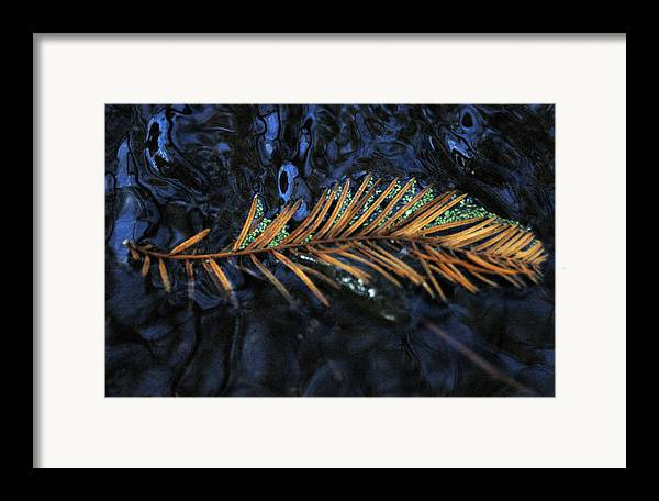 Water Framed Print featuring the photograph Light Music by Deborah Gallaway