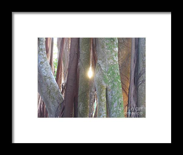 Tree Framed Print featuring the photograph Light by Stephanie Richards