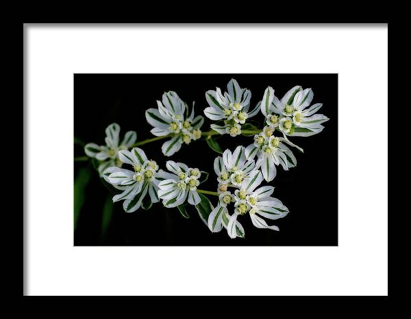 Flowers Framed Print featuring the photograph Lights In The Darkness by Shelly Gunderson
