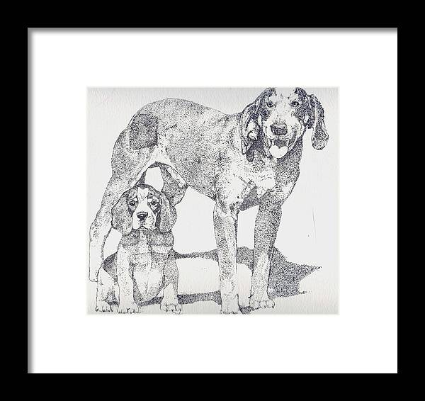 Bluetick Coonhound Framed Print featuring the drawing Like Father Like Son by Debra Sandstrom