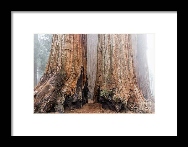 Sequoia National Park Framed Print featuring the photograph Like Giant Feet by Peggy Hughes