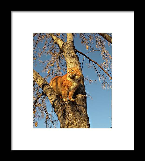 Cat Framed Print featuring the photograph Like The Big Boys by ShaddowCat Arts - Sherry
