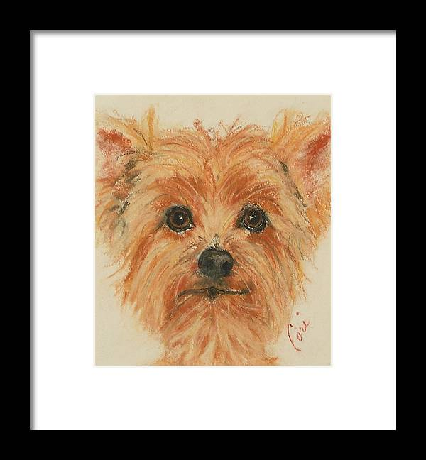 Pastel Framed Print featuring the drawing Lil Rascal by Cori Solomon