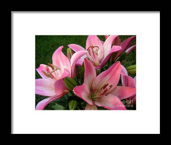 Nature Framed Print featuring the photograph Lilies In Company by Lucyna A M Green