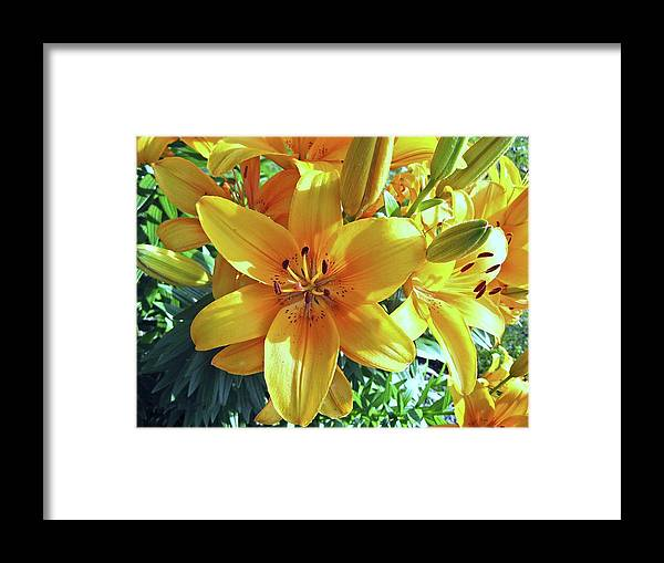Lily Framed Print featuring the photograph Lilies by Lillian Hibiscus