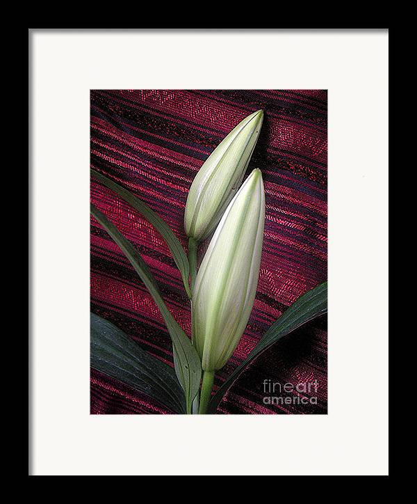 Nature Framed Print featuring the photograph Lilies Paired On Red Brocade by Lucyna A M Green