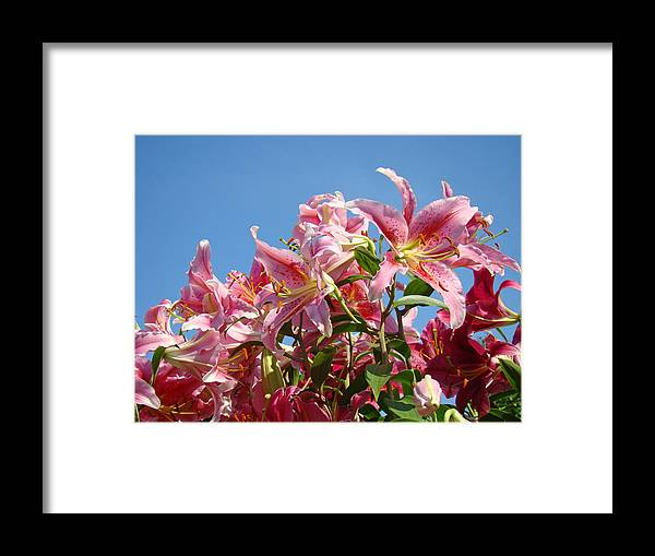Lilies Framed Print featuring the photograph Lilies Pink Lily Flowers Art Prints Floral Summer Garden Baslee Troutman by Baslee Troutman