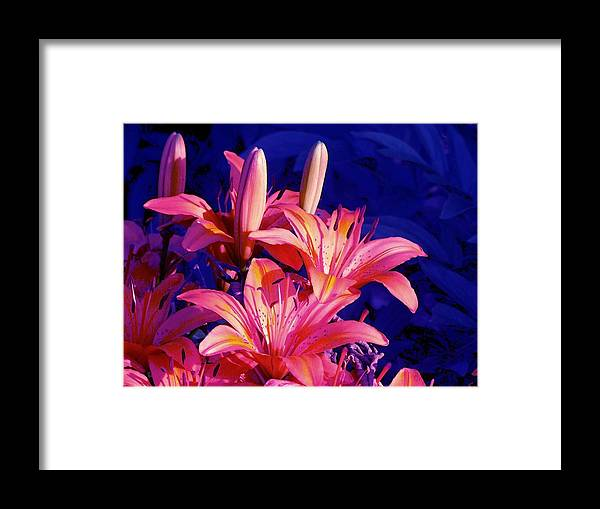 Lily Framed Print featuring the photograph Lillies In Blue by Jim Darnall