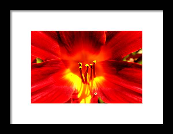 Lilli Framed Print featuring the photograph Lilly A Flame by Trish Jenkins