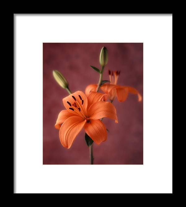 Flora Framed Print featuring the photograph Lily 1 by Joseph Gerges