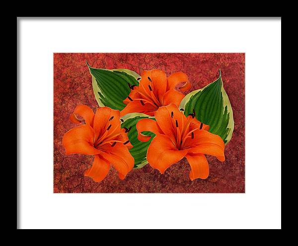 Lily Framed Print featuring the photograph Lily 3 by Manfred Lutzius