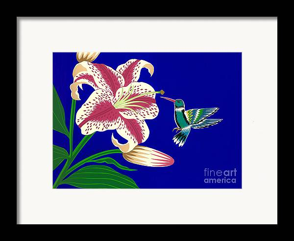 Nature Framed Print featuring the drawing Lily And Hummingbird by Lucyna A M Green