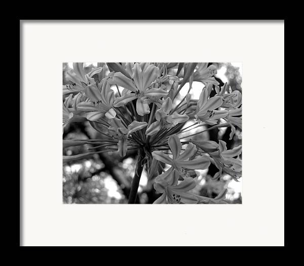 Photograph Framed Print featuring the photograph Lily And The Trees by Lindsey Orlando