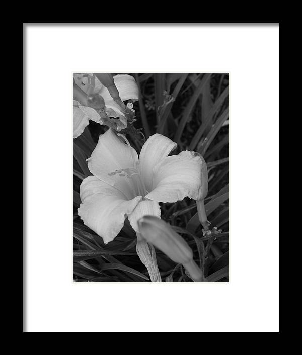 Flower Framed Print featuring the photograph Lily by Audrey Venute