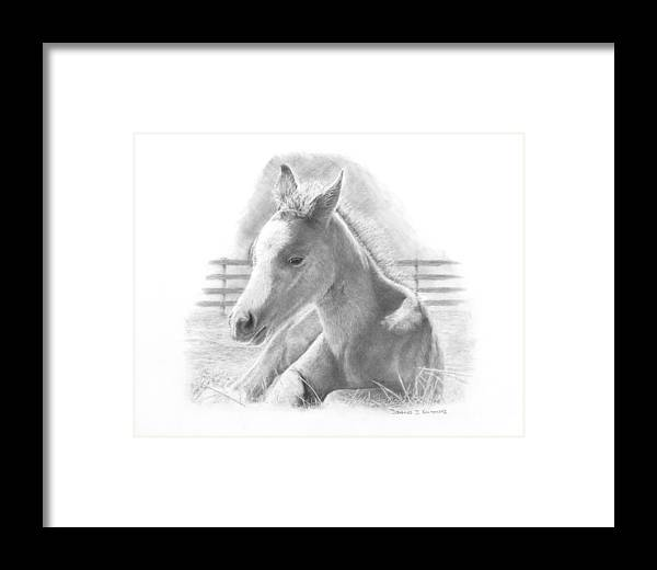 Horse Framed Print featuring the drawing Lily by Douglas Kochanski