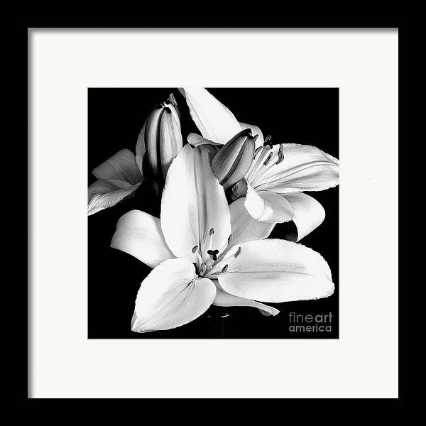 Flowers Framed Print featuring the photograph Lily Flower In Black And White by Kimxa Stark