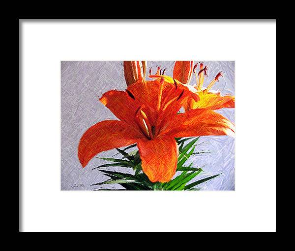 Lily Framed Print featuring the photograph Lily In Color Pencil by Judy Waller