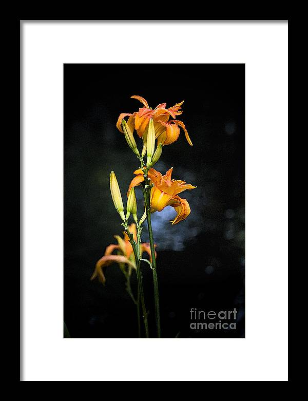 Lily Monet Garden Flora Framed Print featuring the photograph Lily In Monets Garden by Sheila Smart Fine Art Photography
