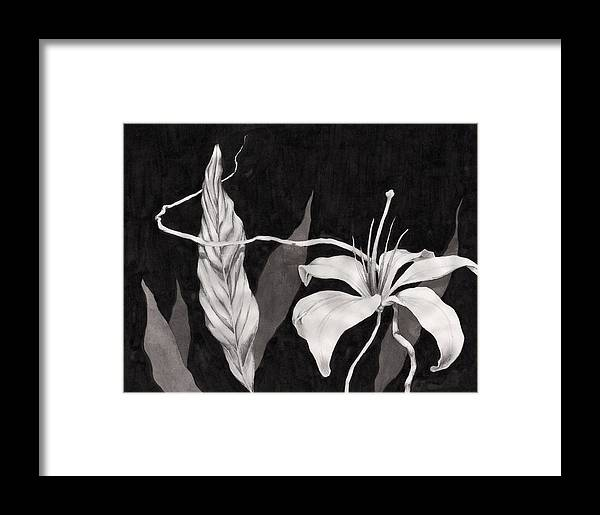 Ink Painting Framed Print featuring the drawing Lily In The Night by Jennifer McDuffie
