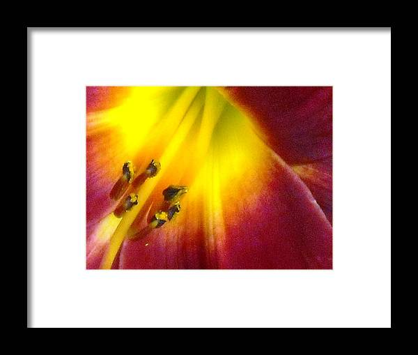 Lily Framed Print featuring the painting Lily Light  by Ward Smith
