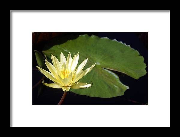 Flower Framed Print featuring the photograph Lily Nilly by Kat Dee
