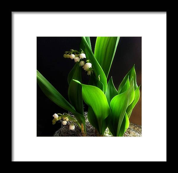 Lily Framed Print featuring the photograph Lily Of The Valley by Katie Wing Vigil