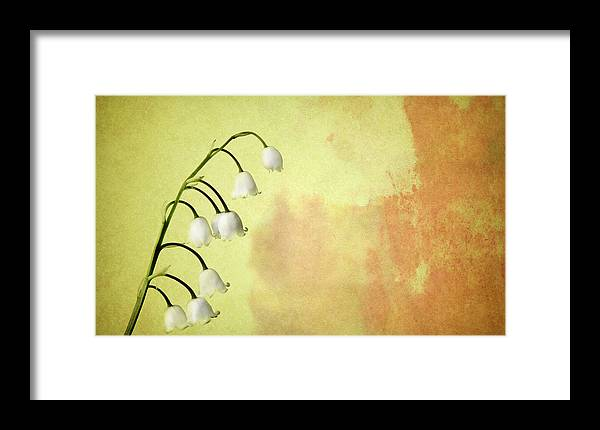 Lily Framed Print featuring the photograph Lily Of The Valley by Mark Rogan