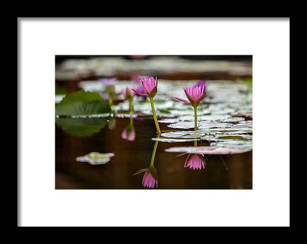 Water Framed Print featuring the photograph Lily Pad Flower Reflections by Robert Aycock