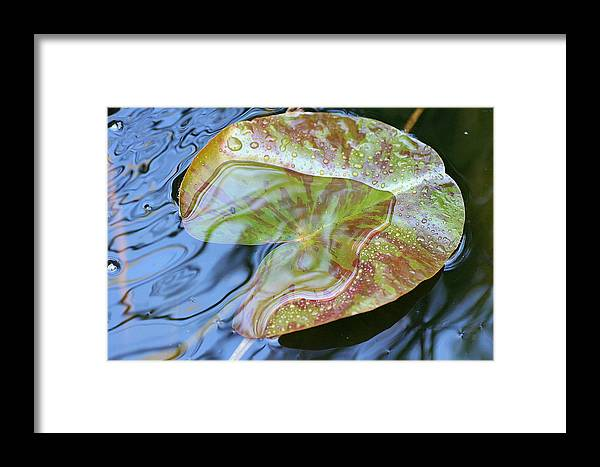Lily Pad Framed Print featuring the photograph Lily Pad On The Pond by Kerry Reed
