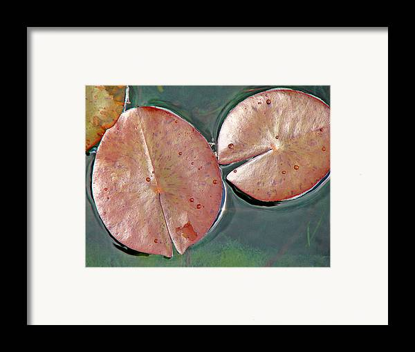Lily Pads Framed Print featuring the photograph Lily Pads 1 by Diana Douglass