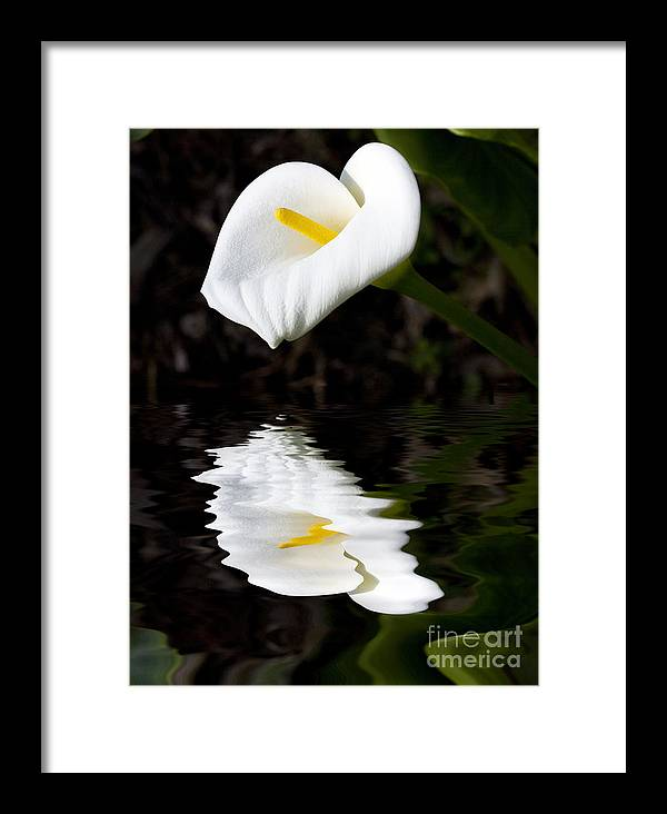 Lily Reflection Flora Flower Framed Print featuring the photograph Lily Reflection by Sheila Smart Fine Art Photography