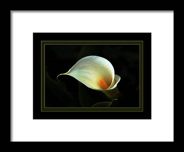 Flower Framed Print featuring the photograph Lily by Richard Gordon