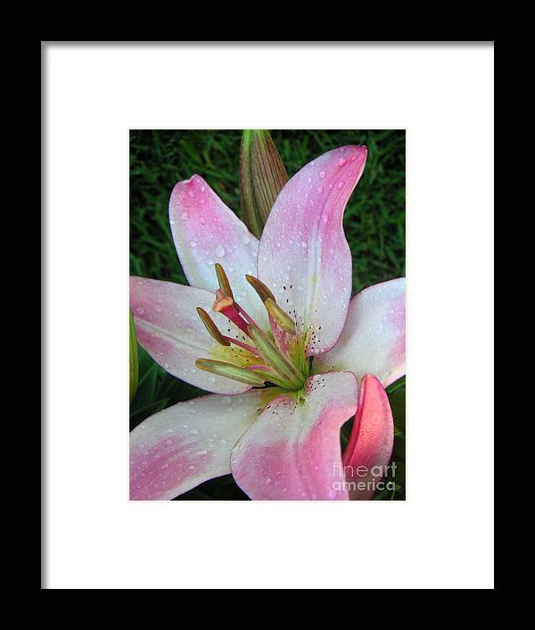 Nature Framed Print featuring the photograph Lily Singled Out by Lucyna A M Green