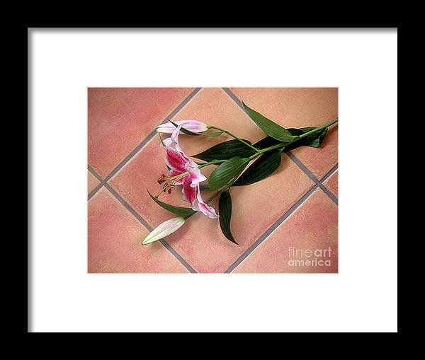 Nature Framed Print featuring the photograph Lily Stem On Tile by Lucyna A M Green
