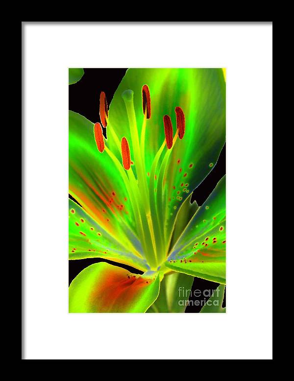 Diane Berry Framed Print featuring the photograph Lime Twist by Diane E Berry