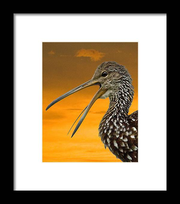 Limpkin Framed Print featuring the photograph Limpkin At Sunset by Larry Linton