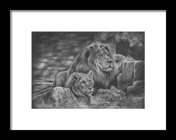 Graphite Drawing Framed Print featuring the drawing Lion Family by JAndy