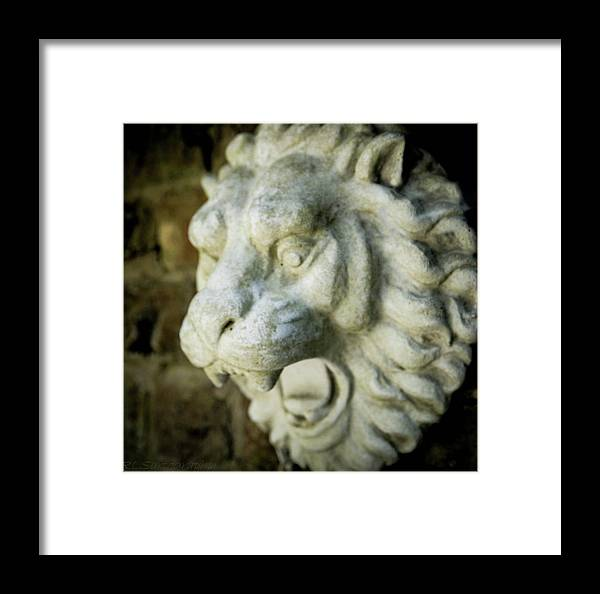 Lion Framed Print featuring the photograph Lion's Gate by RLS Artography