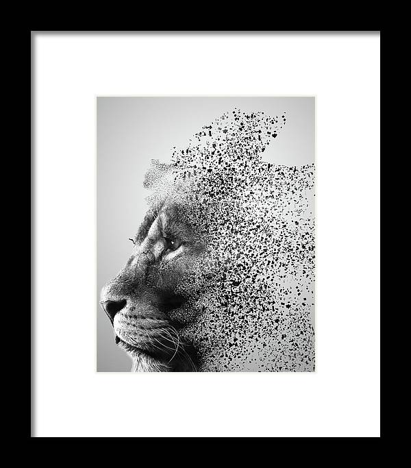 Lions Mind Framed Print by Martin Newman