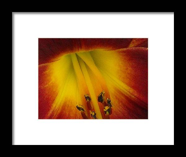 Lips Framed Print featuring the photograph Lip Of The Lily by Ward Smith