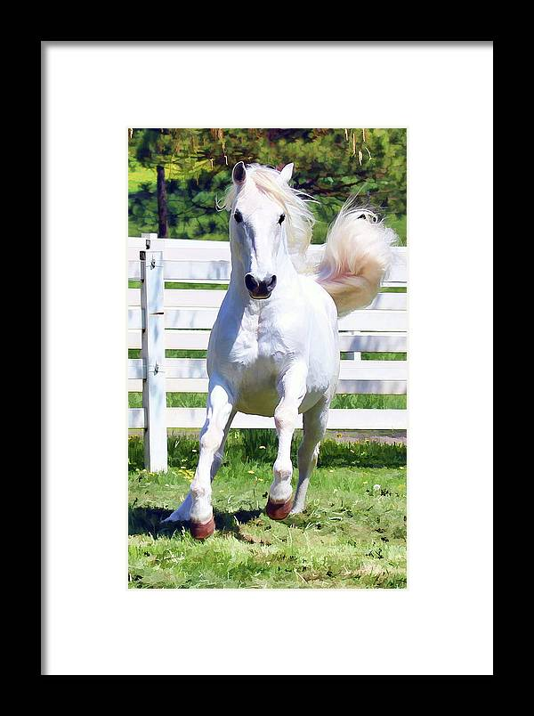 Lipizzan Framed Print featuring the photograph Lipizzan On The Run by Athena Mckinzie