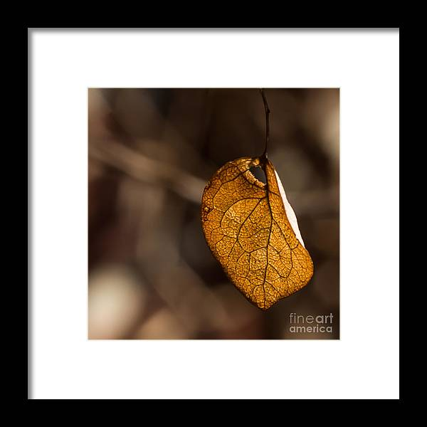 Leaf Framed Print featuring the photograph Little Autumn Leaf by Alissa Beth Photography